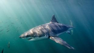Tartalomgyártás 2017: Michael Phelps versenyt úszik egy cápával