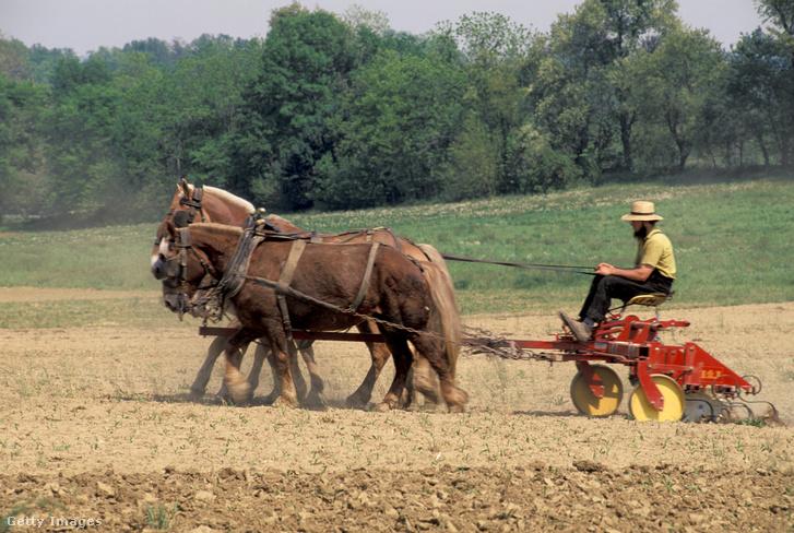 Amish farmer Pennsylvaniban.