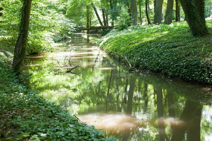 Az Alcsúti Arborétumban a séta rögtön egy patak mentén indul.