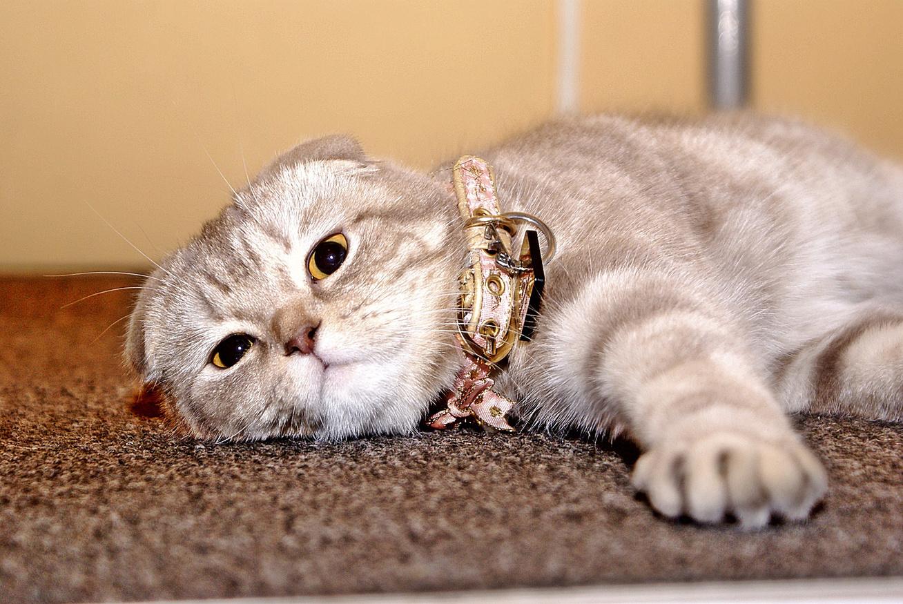 macska-kenyelem
