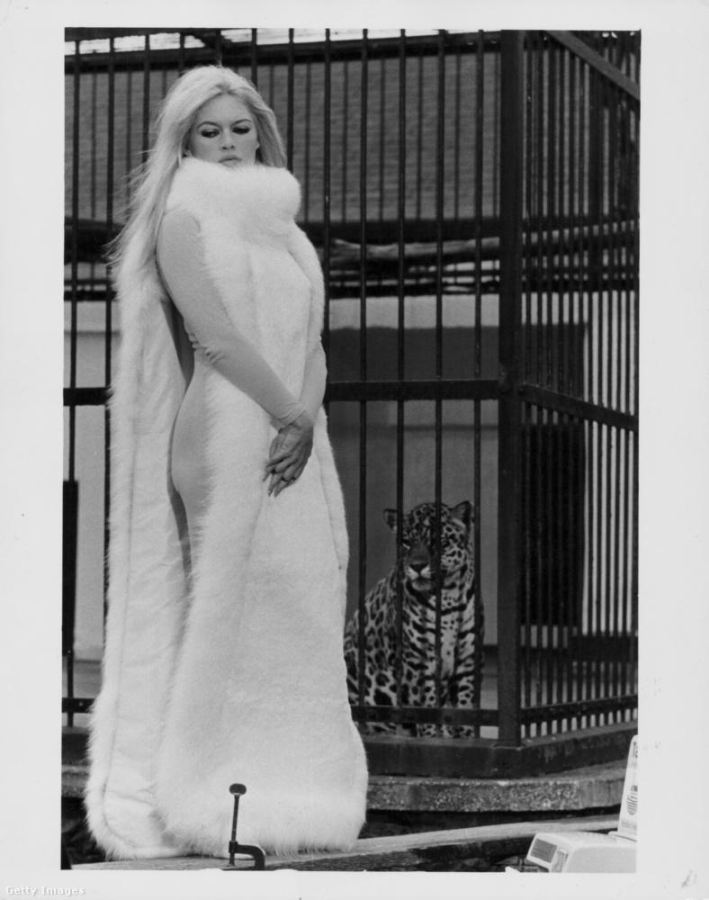 Persze a francia színésznő nemcsak a lenge fürdőruhákban pózolt a kamerák előtt, hanem előszeretettel fotózkodott nagy fehér bundákban is