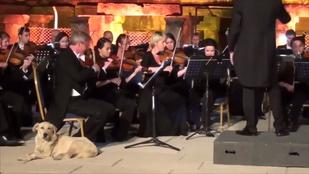 A szimfonikus zenekar koncertjén héderelő kutya a legjobb, amit ma látni fog