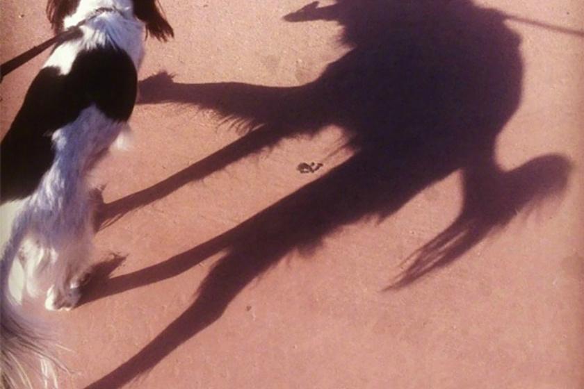 Csoda, hogy ez a kutyus nem ijed meg a saját árnyékától, pedig olyan, mintha egy horrorisztikus démoni négylábú követné mindenhova.