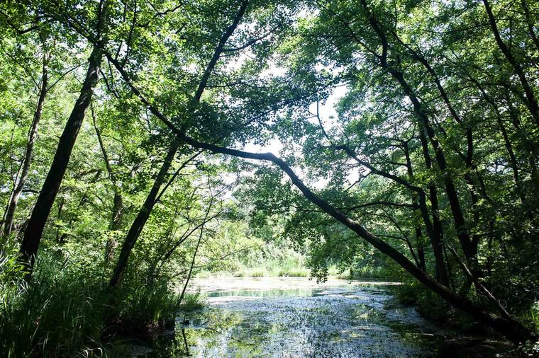 ...ahol minden méteren ilyen csodálatos látványban lehet része.