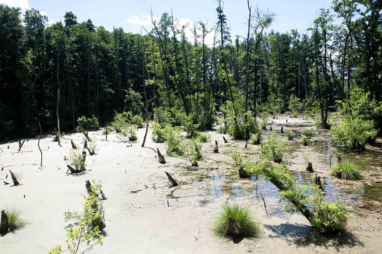 A pallón vezető utat természetesen végigkíséri a víz, de nagyobb tavakat is láthatunk.