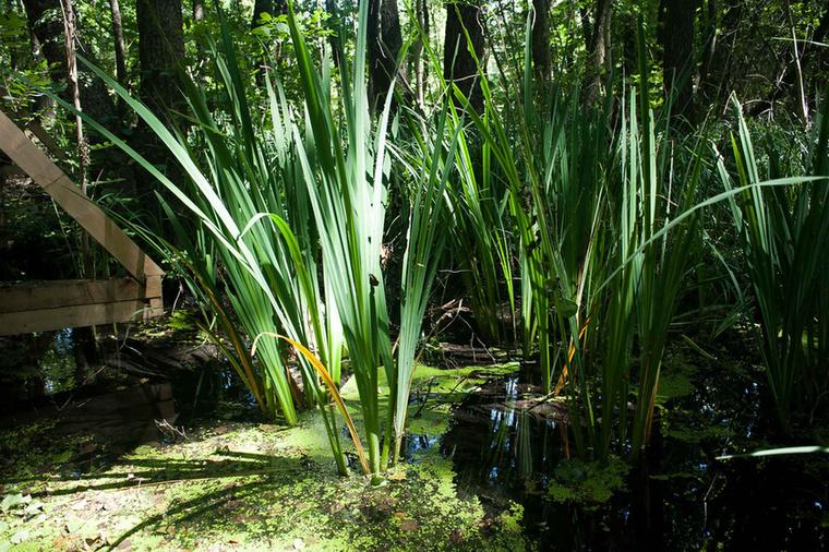 A mocsár tele van izgalmas növényekkel és persze állatokkal is.