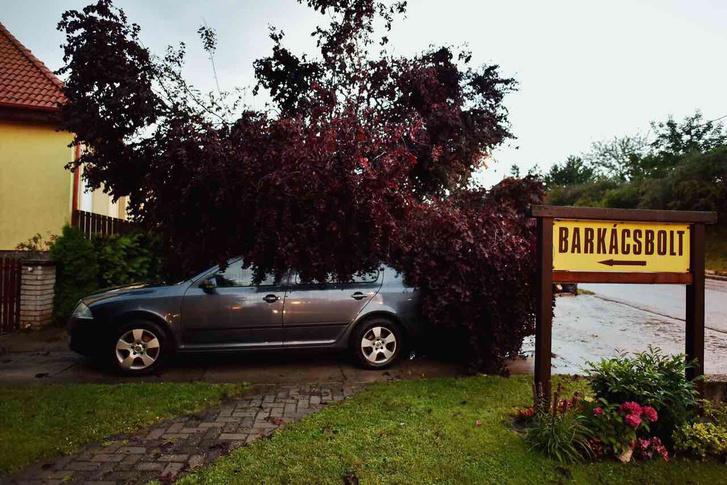 Autóra esett fa Balatonvilágoson