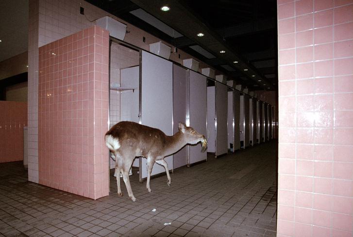 Schmied Andi: Noguchi Town II - Schmied Andi építészként végezte tanulmányait, ami művészetét is meghatározza: fotósorozatait, rövid videófelvételeit installációikba építi, komplex urbanisztikai jelenségeket örökítve meg, illetve leplezve le. Legújabb munkáját egy New York-i ösztöndíj során készítette: a tehetős Gabriella álcája mögé bújva mint potenciális vevő látogatta végig a világváros legdrágább apartmanjait, és készített rejtettkamerás felvételeket.                         http://andischmied.com/