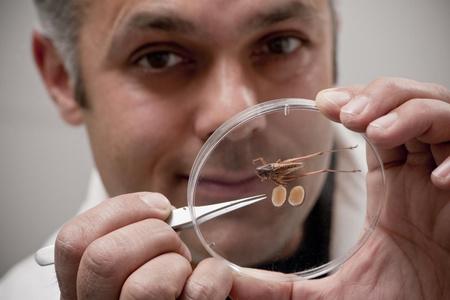 Karim Vahed egy preparált lombszöcskével