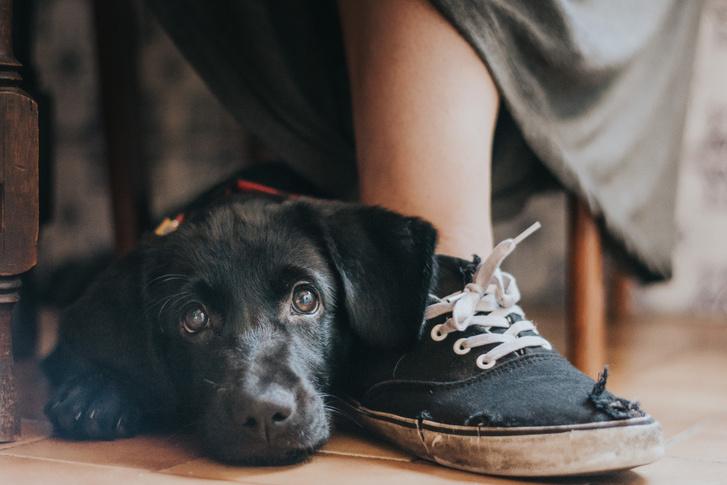 """Az ember legjobb barátja kategória és az év kutya fotósa díj nyertese.                         Cím: Egy lány legjobb barátja                          Dog: Yzma, keverék, mentett kutya                         """"Számomra a fotózás azt jelenti, hogy valódi és őszinte pillanatokat ragadok meg. Ez egyike ezeknek. Az egyik barátom nemrég fogadta be Yzmát és amíg a konyhában beszélgetünk és készítettem néhány képet. A hely és a fényviszonyok egyáltalán nem voltak tökéletesek, mégis ekkor sikerült elkészíteni azt a fotót, amire a legbüszkébb vagyok."""""""
