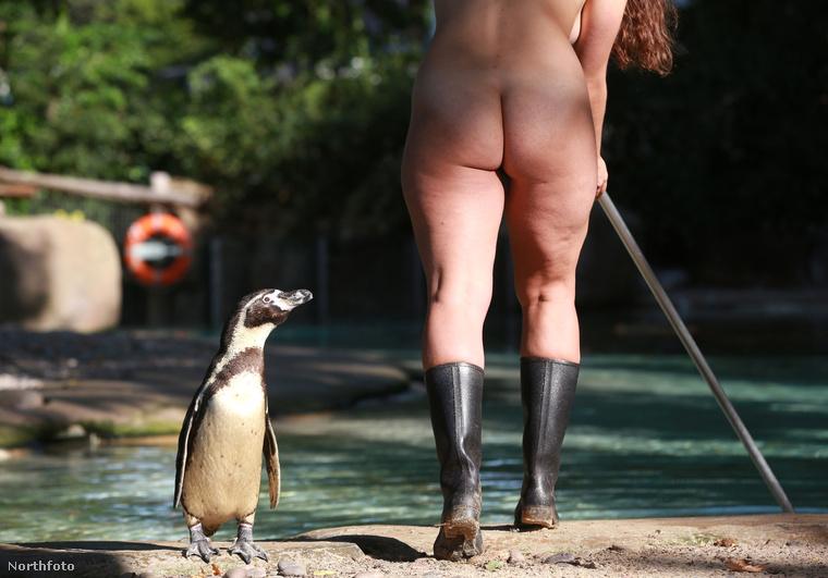 A londoni állatkertben megtörtént az eset