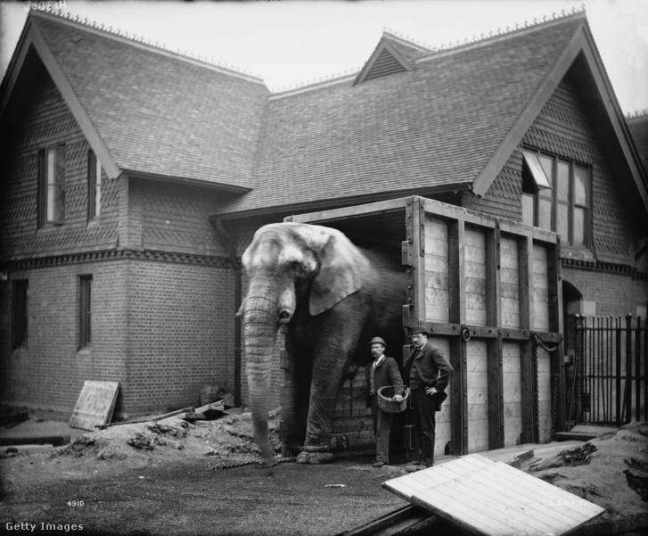 Jumbo, Barnum cirkuszának elefántja