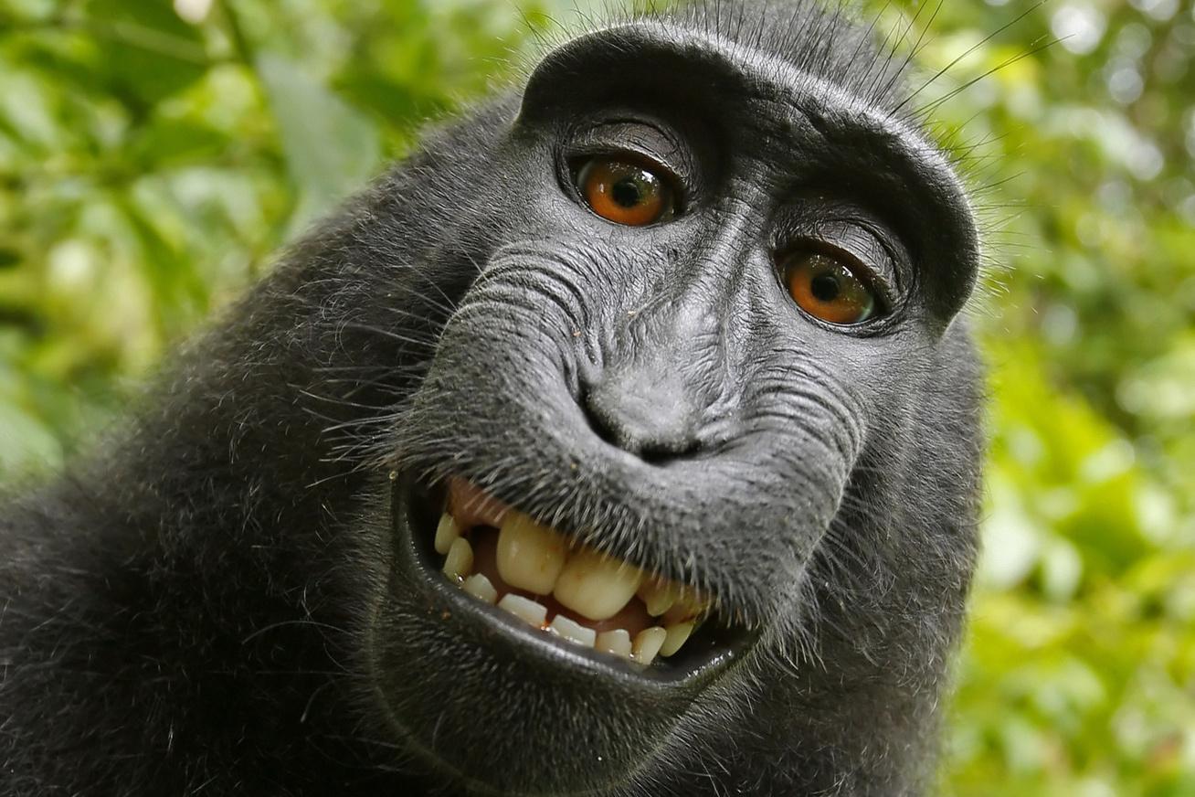 szelfi-majom