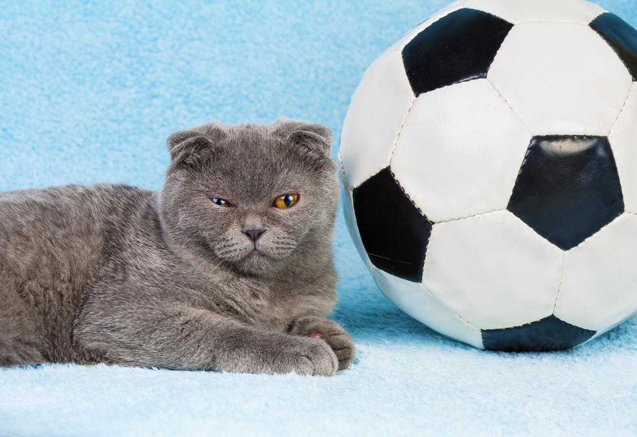 macska-focilabda
