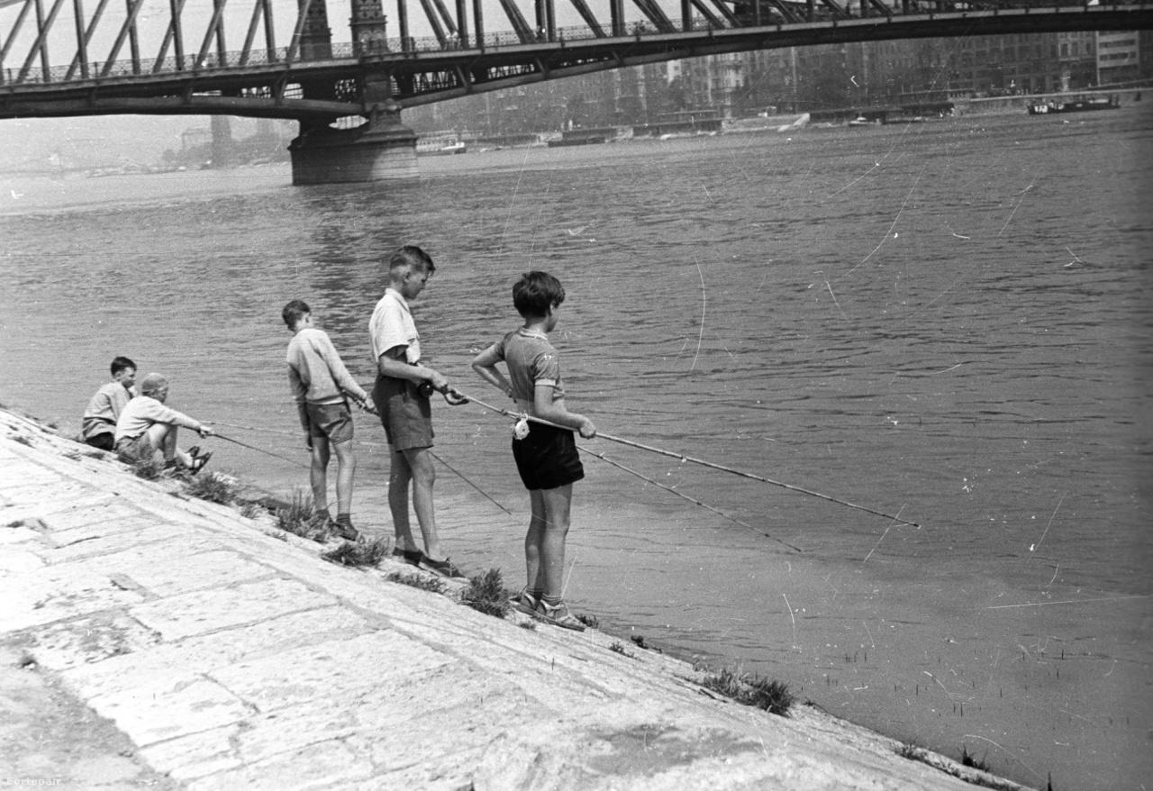 Felgyűrűzött, tárolóorsós bambuszbottal horgászó gyerekek a Szabadság híd mellett 1957-ben. Az ilyen bambuszbotokat még az 1980-as évek elején is lehetett kapni a horgászboltokban, nekem 2 havi zsebpénzembe került a gyűrű nélküli spiccbot, valószínűleg az 50-es években sem volt olcsó mulatság beszerezni őket. A kézben tartott botokból ítélve a gyerekek úszós módszerrel próbálkoznak.