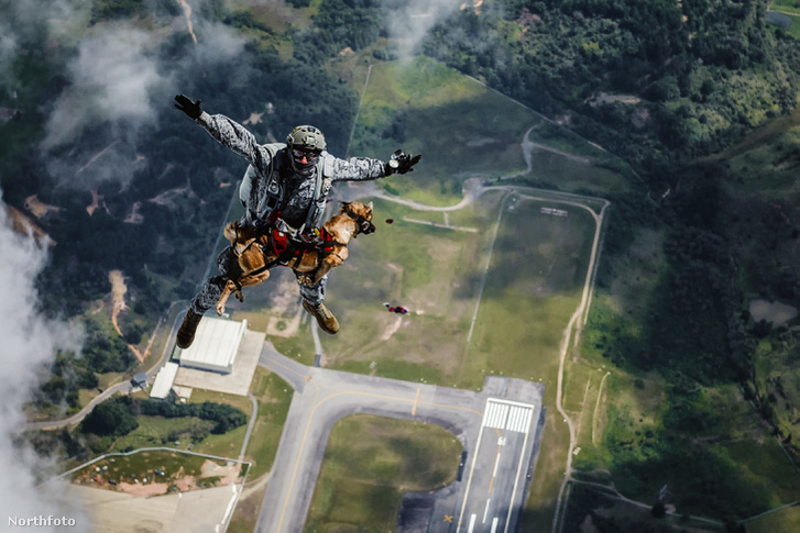 tk3s sn parachuting dog 1