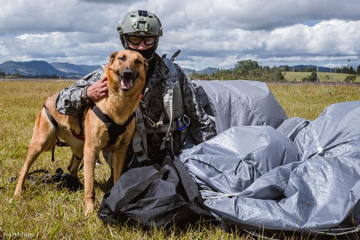 tk3s sn parachuting dog 8
