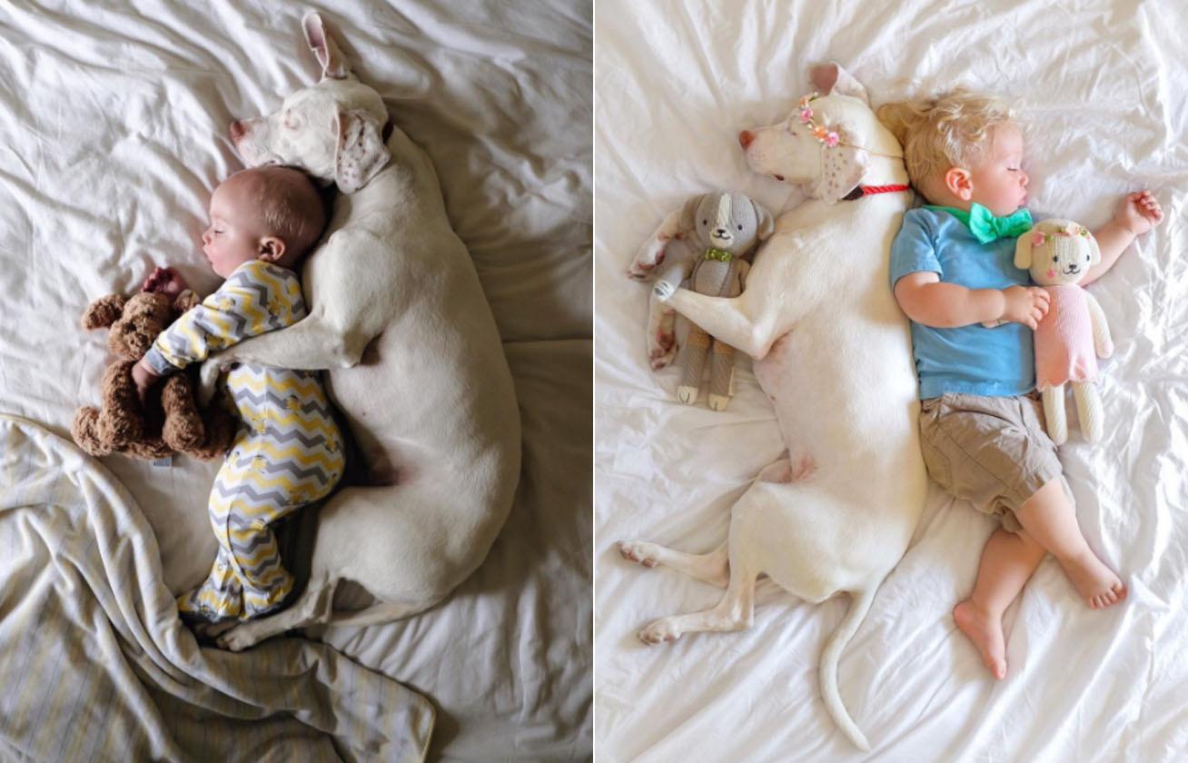 kutya baba cover