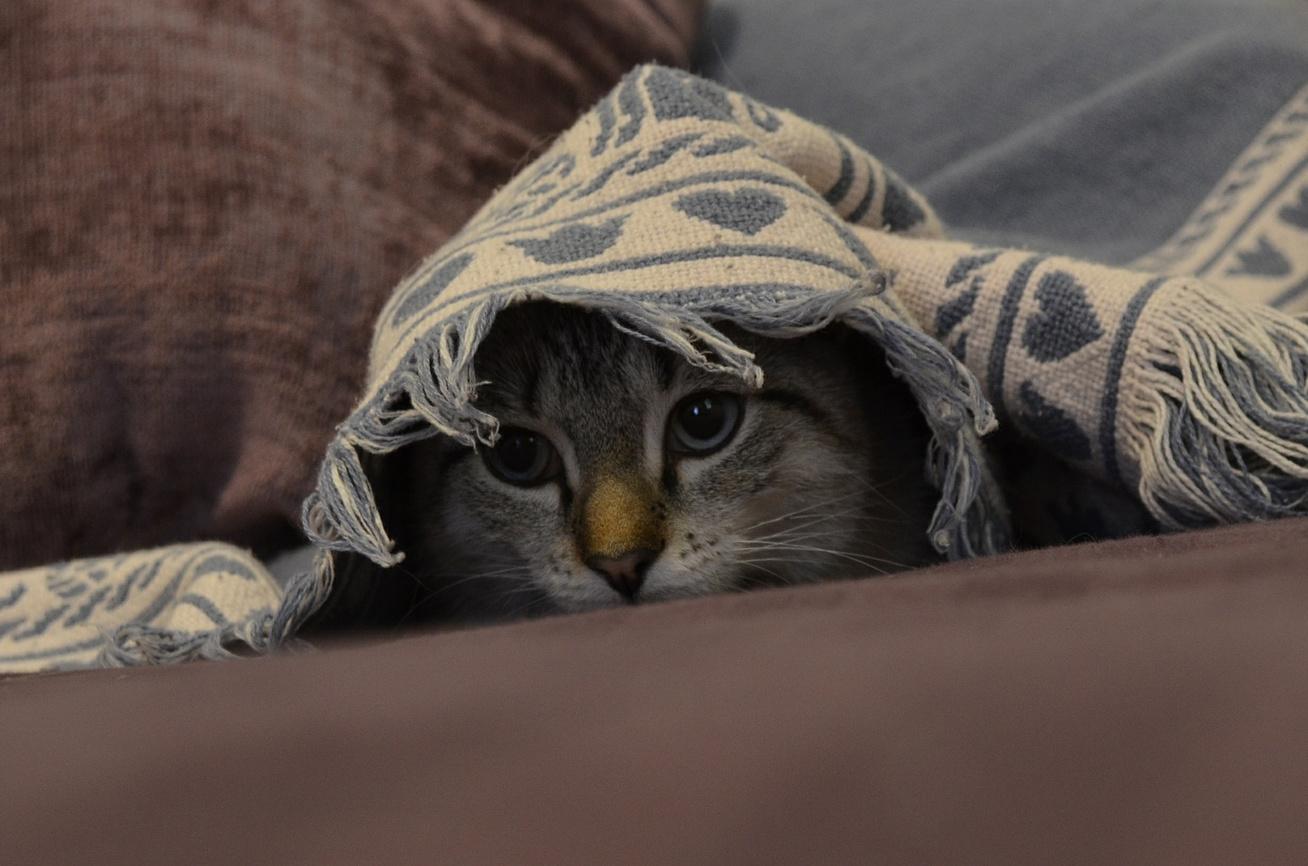 macska-elbujt