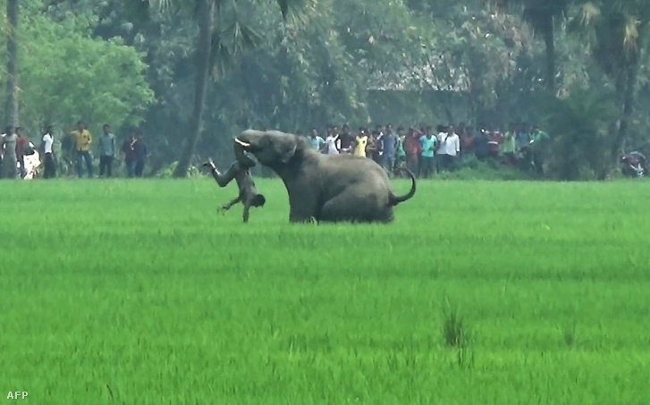 2016. március 20-án öt indiai földművest ölt meg egy csapat vad elefánt. Az állatok kelet-indiai falvakban garázdálkodtak és támadtak meg embereket.