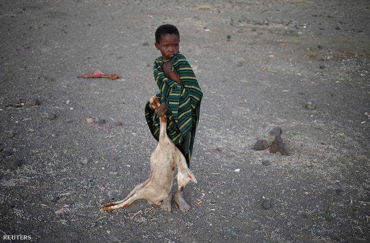 Afrikában a pusztító szárazság ad okot félelemre