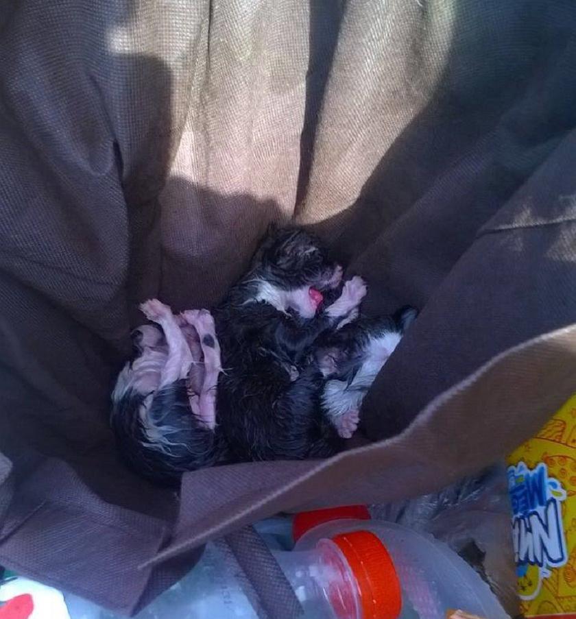 Ép ésszel felfoghatatlan, hogy valaki így akart megszabadulni a cicáktól.