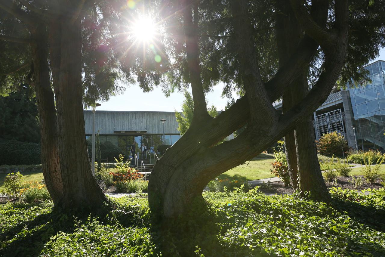 Irigylésre méltó fák, a kampusz kertészei előtt le a kalappal.