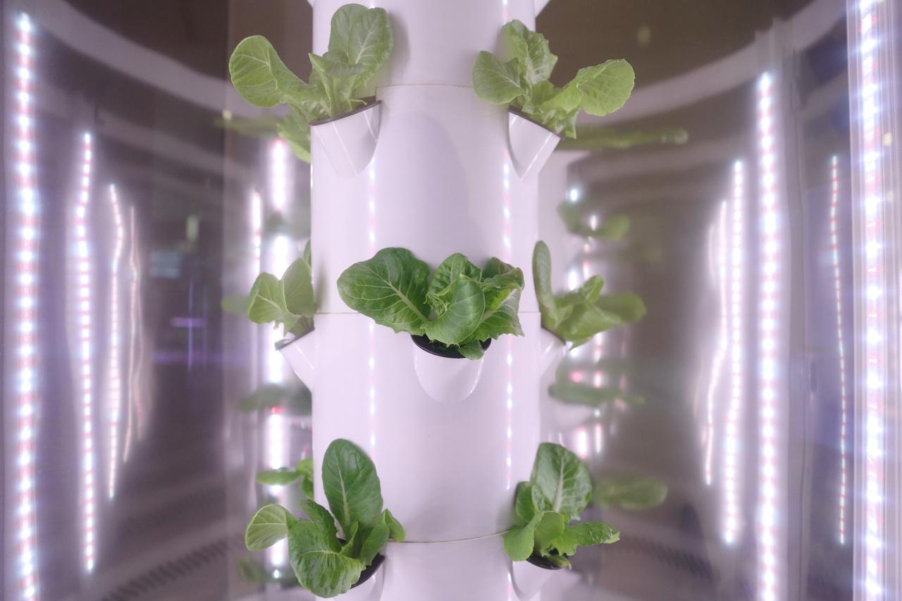 Sok épületben hidropónikus tartályokban zöldségeket, fűszereket termesztenek.