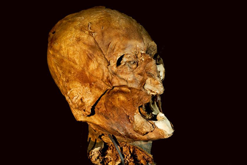 A fejet a francia király, IV. Henrik fejének vélik: feje ugyanis nem tudni, hová lett sírjában nyugvó holttestéről. Egy fanatikus katolikus merényletének áldozataként halt meg, fejét pedig forradalmárok magukkal vitték. Ezután adták-vették, és senki sem tudja, hová került végül.