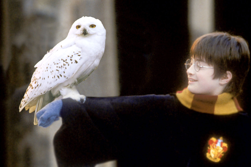 harry-potter-bagoly
