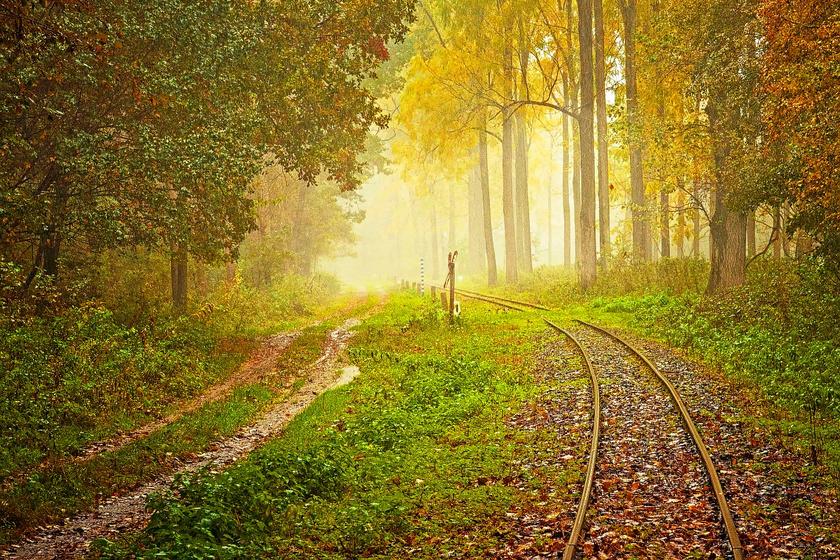 A Gemenci-erdő a Duna-Dráva Nemzeti Park féltve őrzött kincse, melyet behálóznak a kis utak, és ahol 31 kilométeren meseszép kisvasút jár.