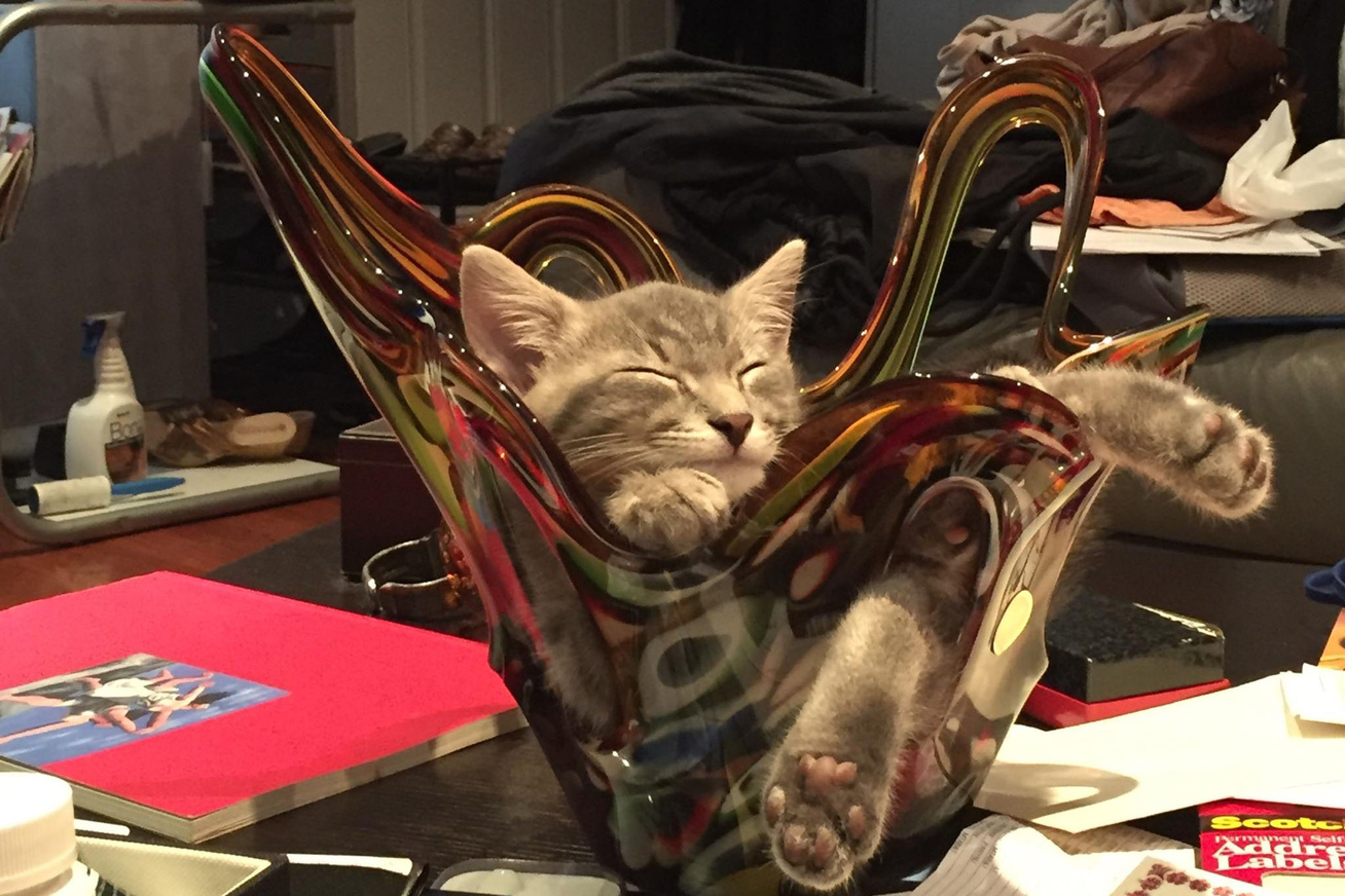 cica-uvegtal-nagy