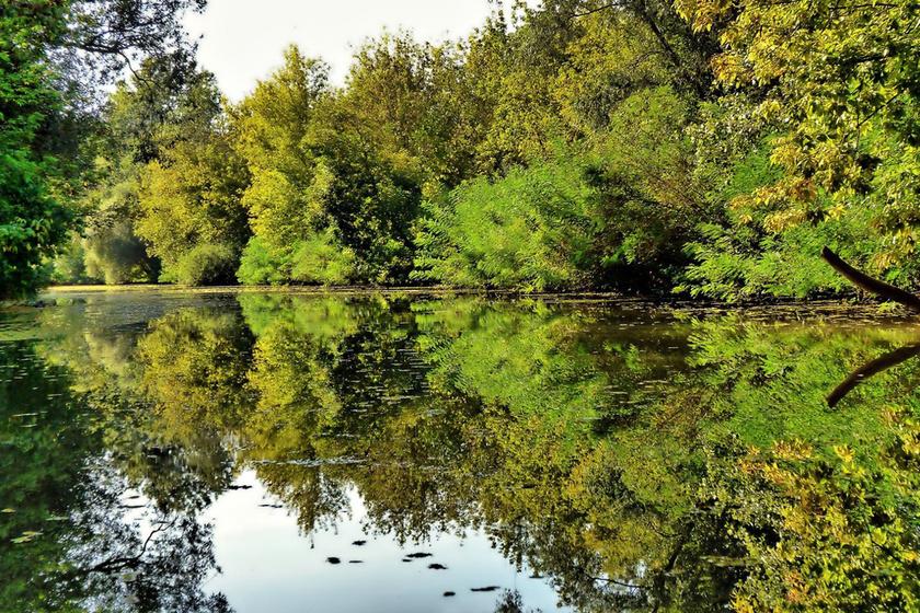 Csodás zöld természet veszi körül a tavat.