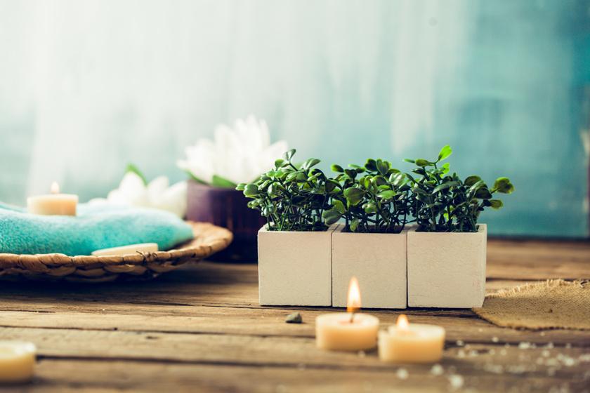 Néhány apró, párakedvelő növény különlegessé teszi a miliőt, és a klímát is bírja.
