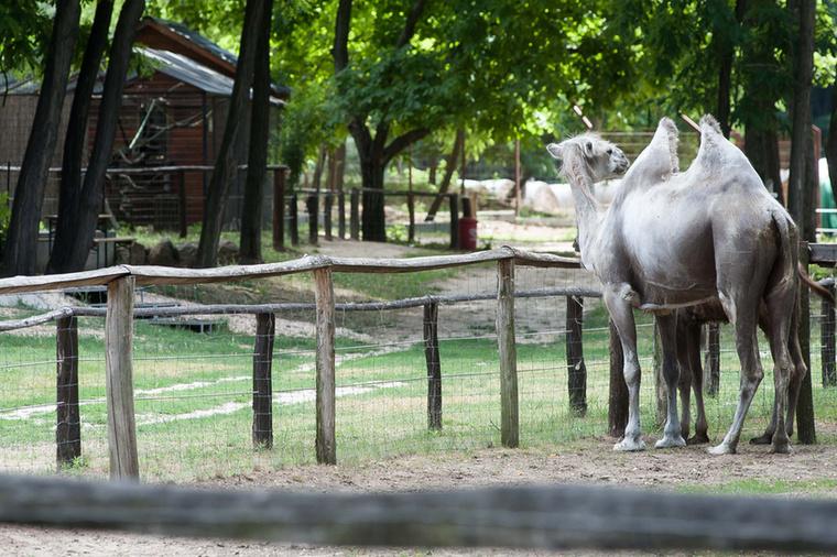 És persze ezen érdekességek mellett vannak egyéb egzotikus emlősök...