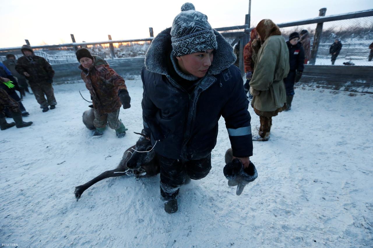 Húszezer nomád él Oroszország sarkköri vidékein, rénszarvascsordákat terelve. Legtöbben közülük nyenyecek. Az ő nevük 18. századtól egyet jelentett a rénszarvastenyésztéssel, amikorra a területet végleg meghódította Oroszország. Hivatalos szakmai ünnepnapjuk is van, 2007 óta augusztus 2., de az egyébként több évtizede létező szarvastenyésztők napját sok helyen inkább tavasszal tartják.