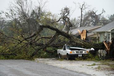 A 300 km/órás szél a fákat sem kímélte.