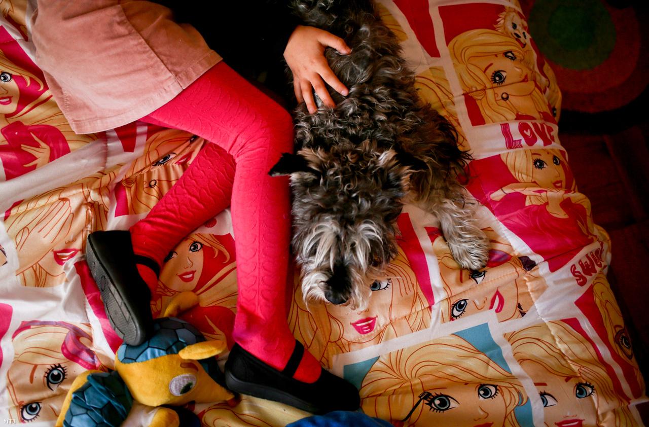 Luna ügye számos hasonló helyzetben lévő szülőt felbátorított, azóta legalább öt kiskorú név- és nemváltoztatására irányuló kérelem érkezett a chilei hatóságokhoz, írja az AP News. A fotón Luna idén júliusban játszik otthon a kutyájával.