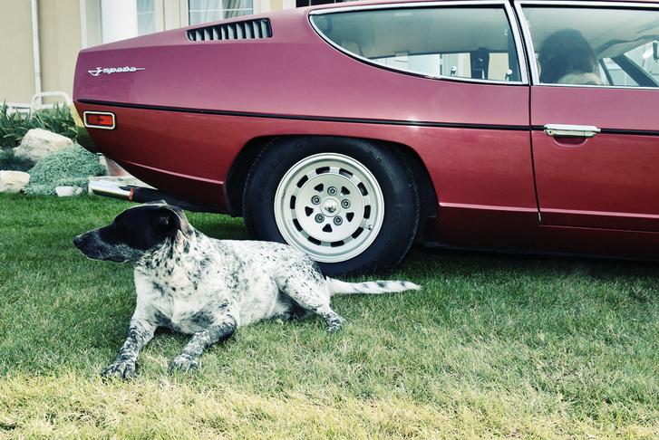A fotók elkészítése során egyetlen állatnak sem esett bántódása.