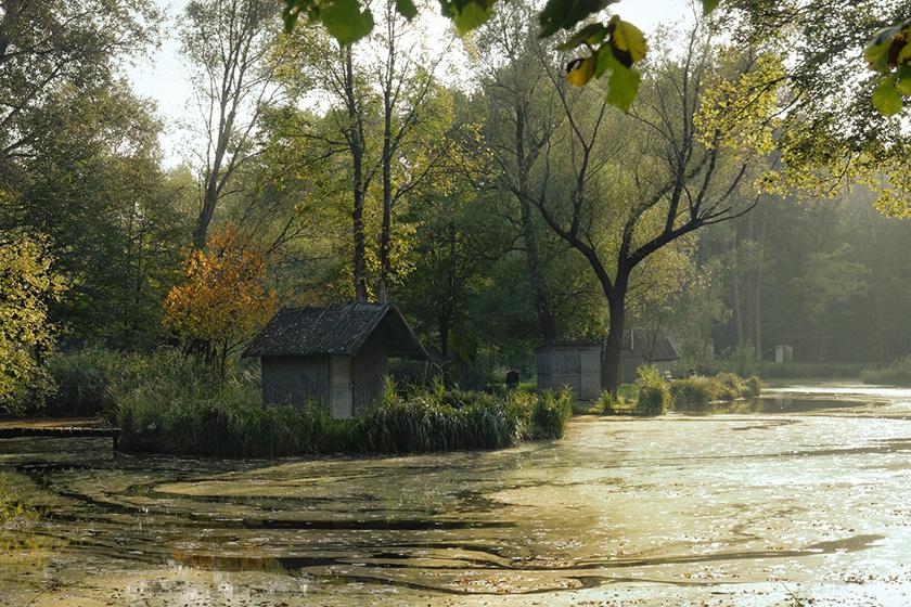 Noha a településhez egészen közel van, a Sződligeti-tó mégis csodálatos, vadregényes környezetben fekszik.