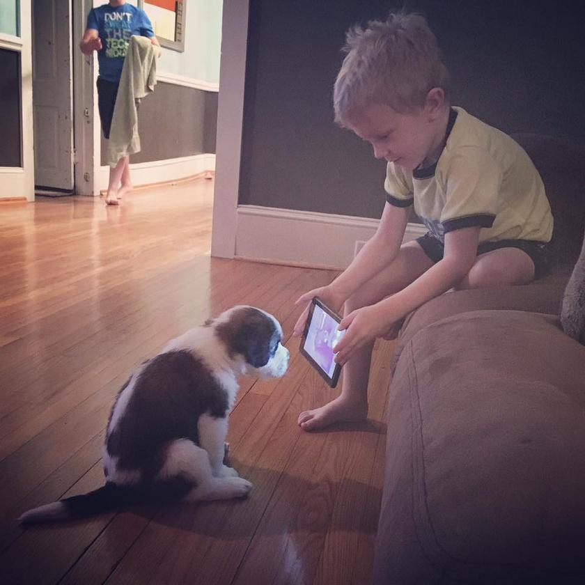 Ez a kisfiú megígérte apjának, hogy tanítani fogja a kutyusát: végül úgy döntött, a legbiztosabb, ha a youtube-os tréningtippeket egyenesen a kutyának mutatja meg. A pöttöm igazi jó diák.