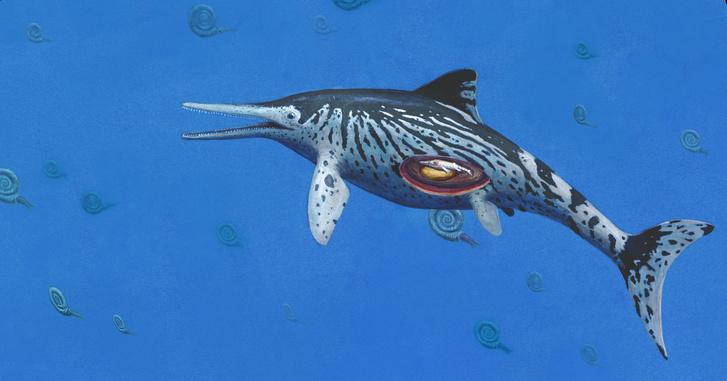 Egy terhes Ichthyosaurust ábrázoló illusztráció.