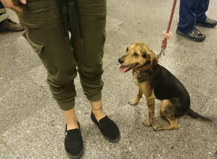 Ő Husi, akit a rendőrség, állatvédők, a BKK és a BKV munkatársai – és természetesen a gazdi – kiszabadított az M3-as metró alagútjából