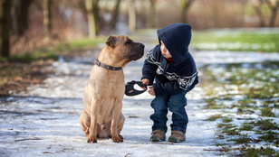 Melyik kutya nem fogja megharapni a gyereket?