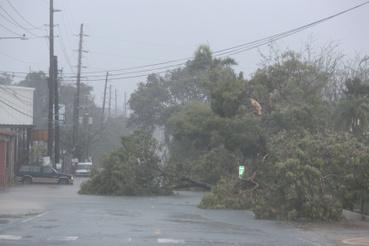 Kidőlt fák Fajardo utcái. Puerto Ricónál tombol már a rendkívül heves, 5-ös erősségű, Florida felé tartó Irma hurrikán.