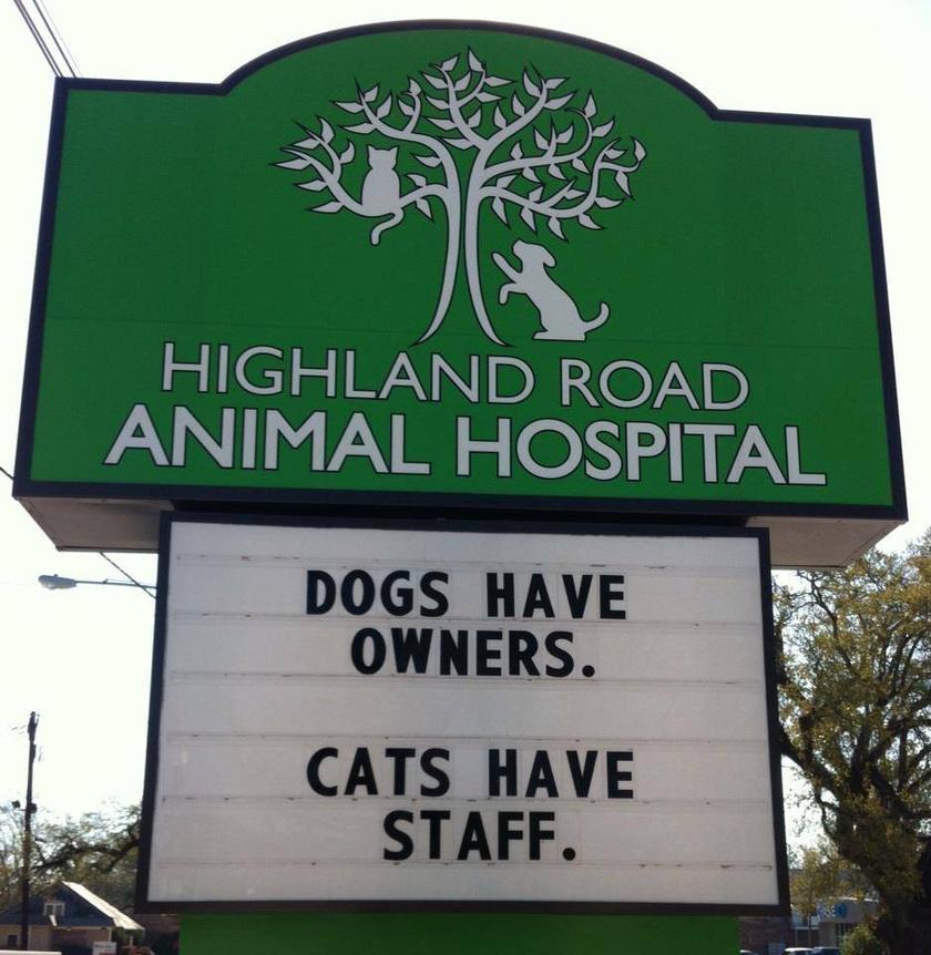 """""""A kutyáknak gazdájuk van. A macskáknak személyzetük."""""""