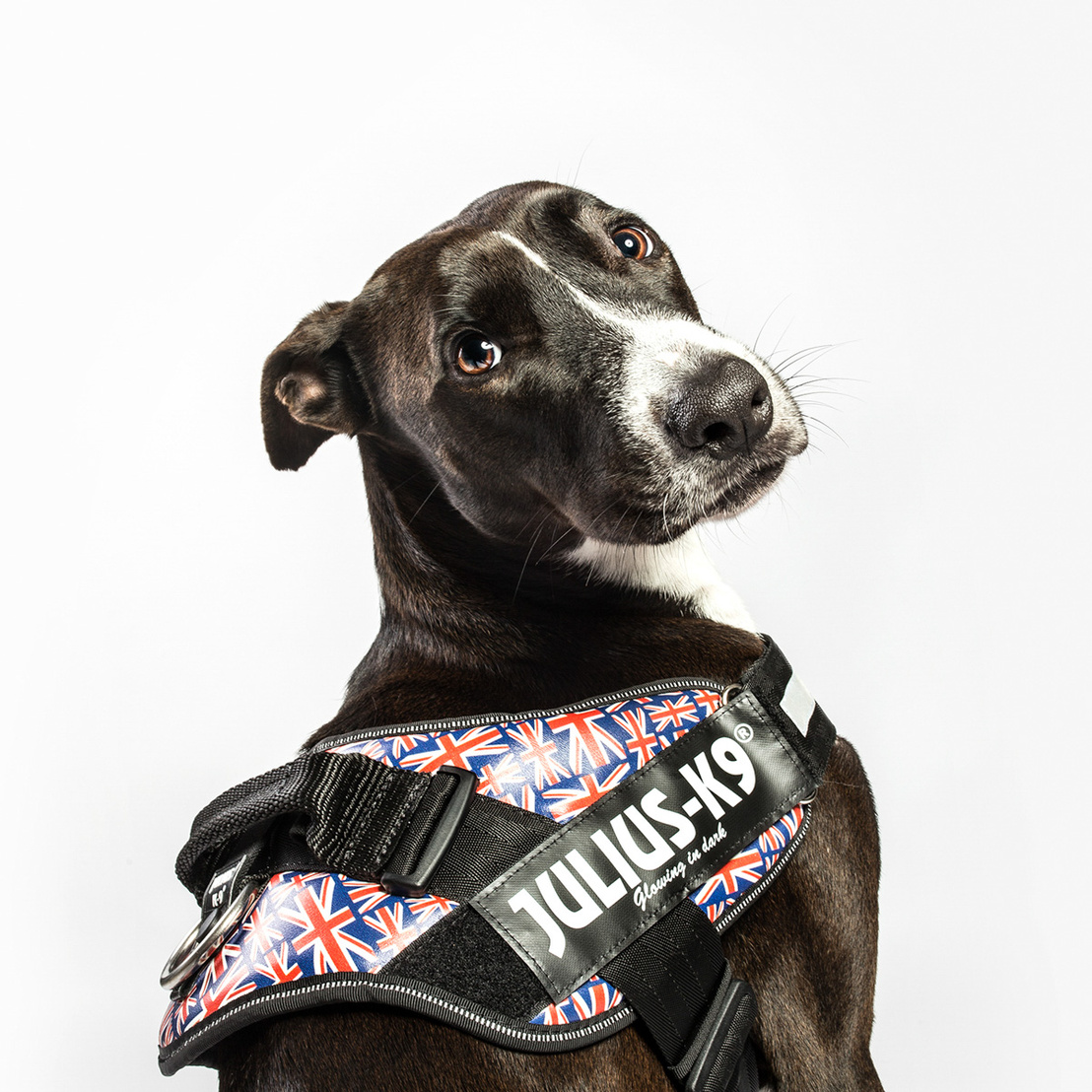 julius-k9-dog-harness 032