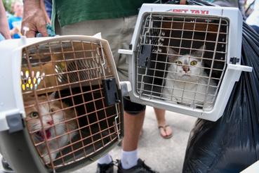 A cicákat is evakuálták