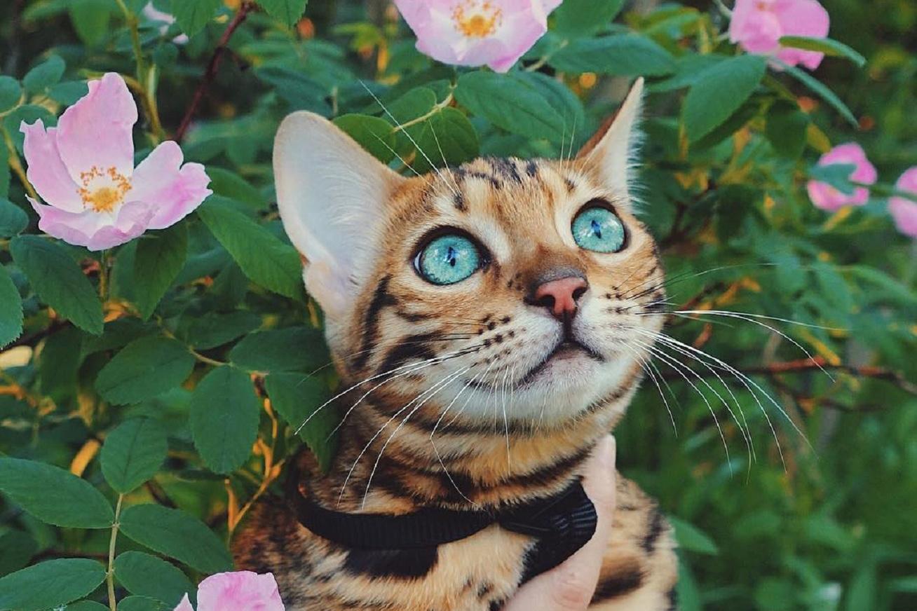 suki-macska-viragok kepe