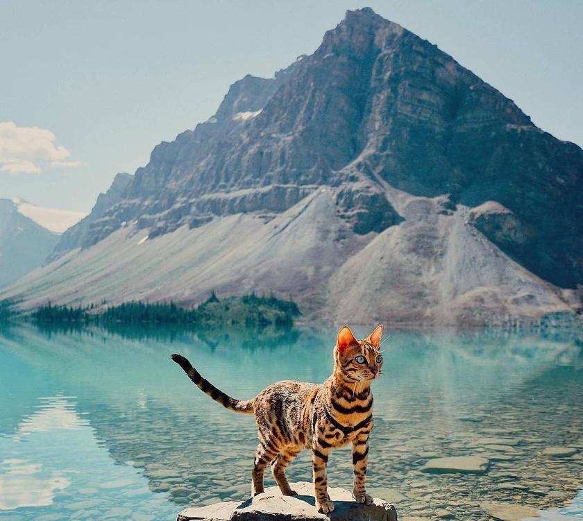 A cica a legizgalmasabb helyekre is elkíséri gazdáját.